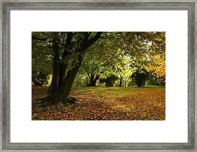 The Beauty Of Autumn Framed Print