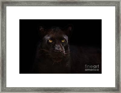 The Beauty Of Black Framed Print by Ashley Vincent