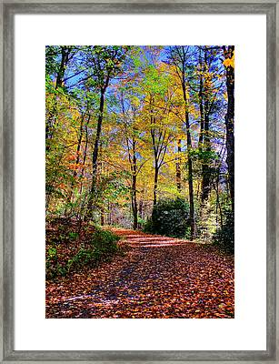 The Beauty Of Fall Framed Print
