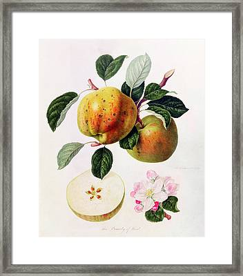 The Beauty Of Kent Framed Print by William Hooker
