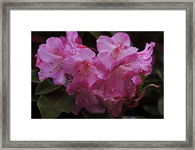 The Beauty Of Pink Framed Print