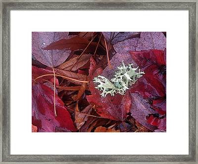 Framed Print featuring the photograph The Beauty Of Rain by Gwyn Newcombe