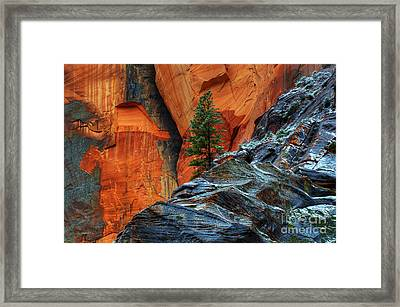 The Beauty Of Sandstone Zion Framed Print by Bob Christopher