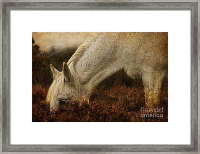 The Bed Of Heather Framed Print by Angel  Tarantella