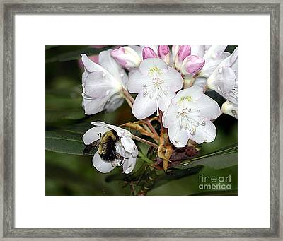 The Bee And The Rhododendron Framed Print