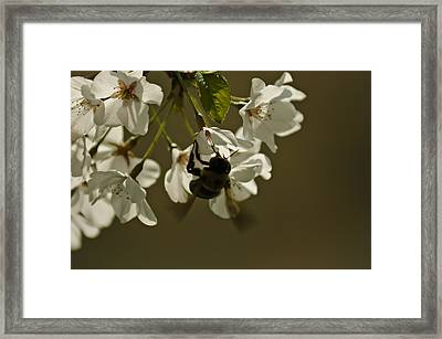 Framed Print featuring the painting The Bee by Debra Crank