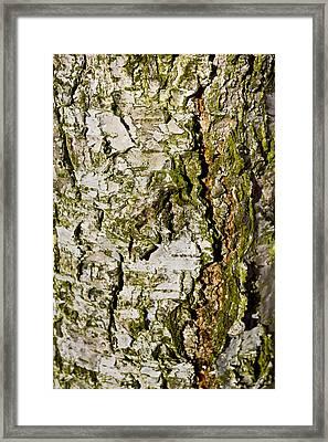 The Beech Tree Framed Print