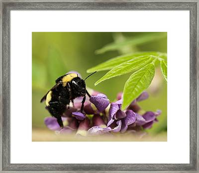 Framed Print featuring the photograph The Bee's Knees by Cathy Donohoue