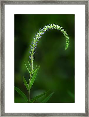 The Begining Framed Print by Bill Wakeley