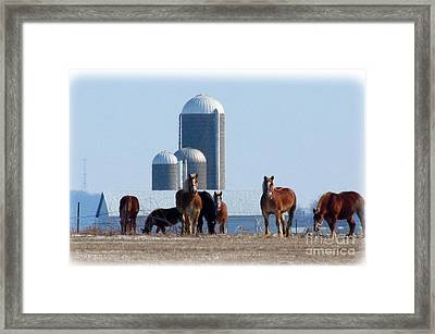 The Belgians Framed Print by Tina M Wenger