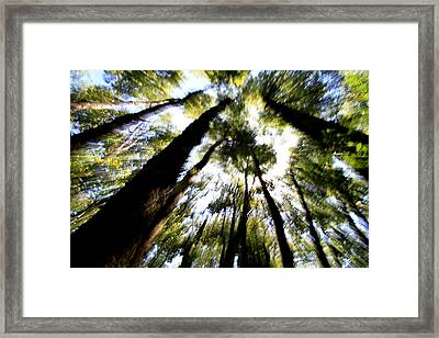 The Bewitched Forest Framed Print