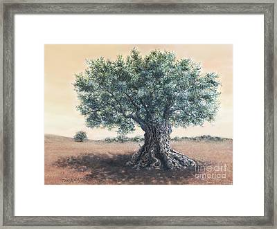 The Biblical Olive Tree Framed Print by Miki Karni
