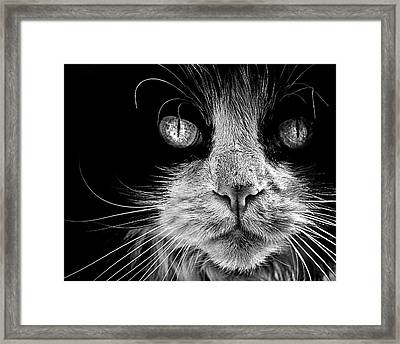The Big Bad Boy Framed Print