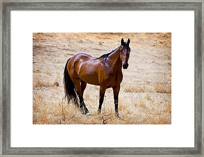 The Big Bay Framed Print by Michelle Wrighton