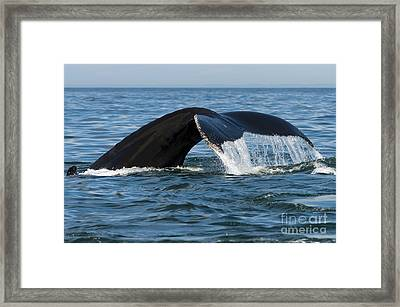 The Big Blue In The Bigger Blues... Framed Print