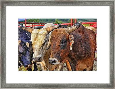The Big Bull Strategy Meeting Framed Print by Kenny Francis