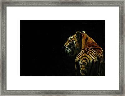 The Big Cat. Framed Print