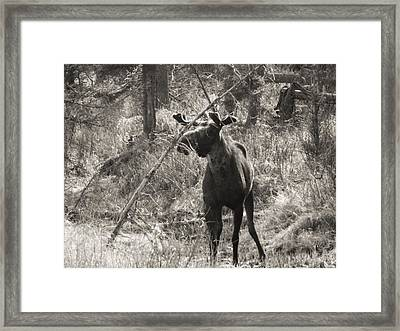 The Big Dripper Framed Print