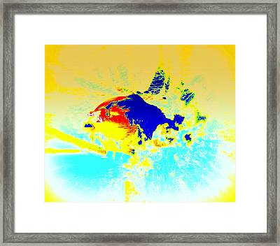The Big Fish Wondering Where To Swim  Framed Print by Hilde Widerberg