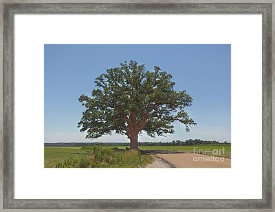 The Big Tree Framed Print by Kay Pickens