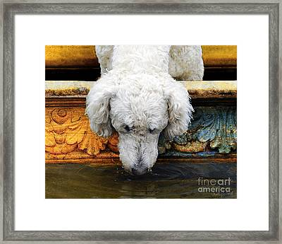 The Big Water Bowl Framed Print by Judy Wood