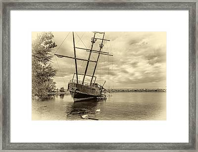 The Big Weasel 2 Sepia Framed Print