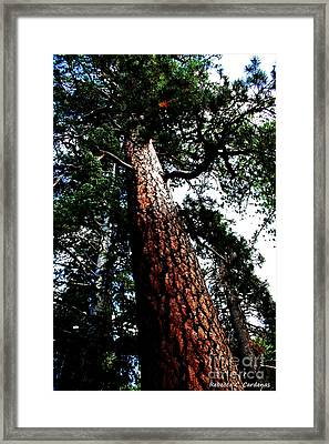 The Biggest One Framed Print by Rebecca Christine Cardenas