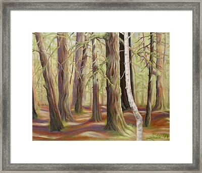 The Birch Tree Framed Print by Ida Eriksen