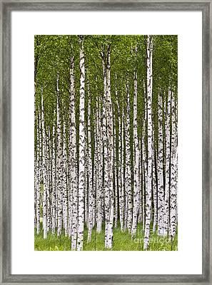 The Birch Wood Framed Print by Heiko Koehrer-Wagner
