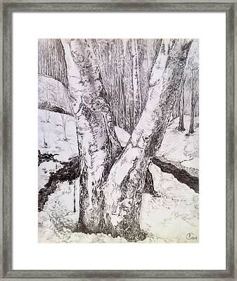 The Birches Framed Print by Iya Carson