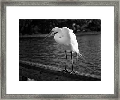 The Bird Framed Print by Howard Salmon