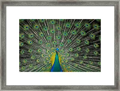 The Bird Of A Thousand Eyes Framed Print by Carl Purcell