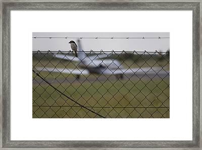 The Bird Framed Print by Paul Job