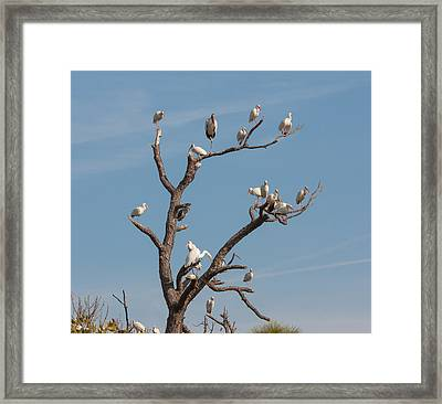 Framed Print featuring the photograph The Bird Tree by John M Bailey