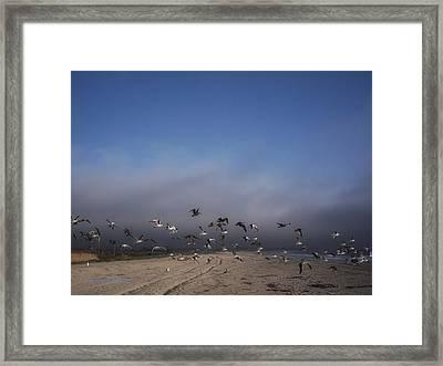 The Birds Framed Print by Donna Blackhall