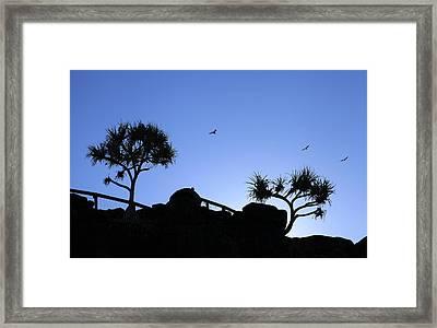 The Birds Framed Print by Noel Elliot