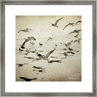 The Birds Framed Print by Sharon Coty