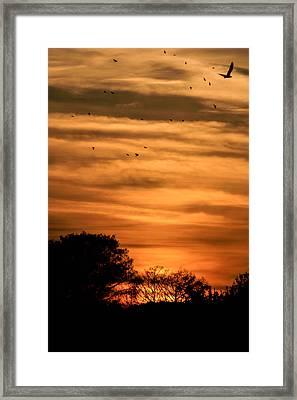 The Birds Still Fly Framed Print by Christy Usilton