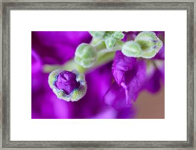 The Birth Of Beauty Framed Print