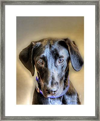 The Black Lab Framed Print by Robert Pearson