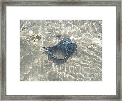 The Black Seashell Framed Print by Mother Nature