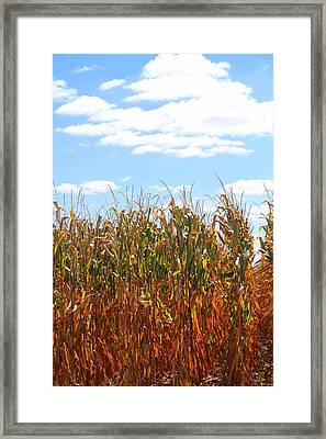 Framed Print featuring the photograph The Bloody Cornfield by Debra Kaye McKrill