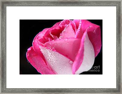 The Bloom Framed Print