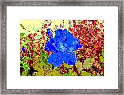 The Blue Blue Rose Framed Print by Alys Caviness-Gober