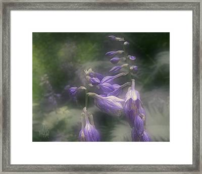 The Blue Lilies Framed Print