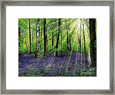 The Bluebell Woods Framed Print