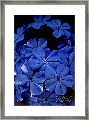 The Blues Framed Print by Clare Bevan