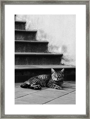 The Boss Framed Print by Laura Melis