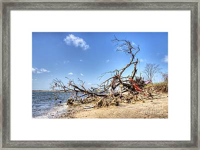 The Bottle Tree Framed Print by Rick Kuperberg Sr