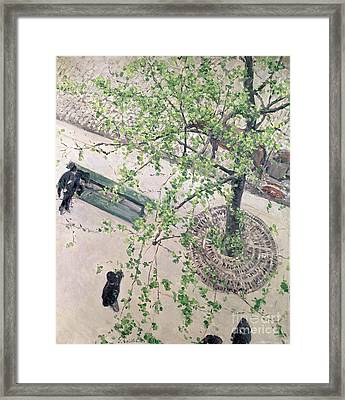 The Boulevard Viewed From Above Framed Print by Gustave Caillebotte